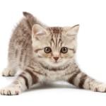 12-ФЖ-0001 котенок