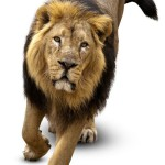 12-ФЖ-0004 лев идущий