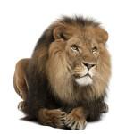 12-ФЖ-0008 лев лежащий