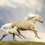 12-ФЖ-0009 лошадь с жеребенком