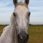 12-ФЖ-0012 лошадь