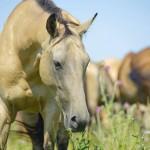 12-ФЖ-0013 лошадь