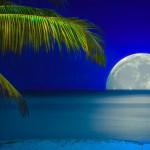 12-ФПр-0047 карибская ночь