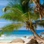 12-ФПр-0052 пальмы море