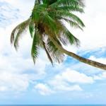 12-ФПр-0056 пальма море