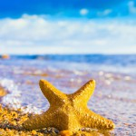 12-ФПр-0058 морская звезда песок
