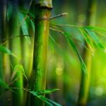 12-ФПр-0064 бамбук
