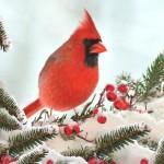 12-ФПт-0005 птичка кардинал