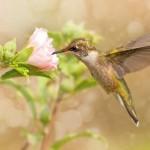 12-ФПт-0008 колибри и розовый цветок