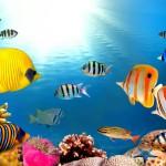 12-ФР-0003 подводный мир