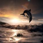 12-ФР-0004 дельфин над водой