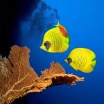 12-ФР-0005 рыбки тропические