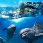 12-ФР-0007 дельфины