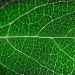 12-ФФ-0001 зеленый лист