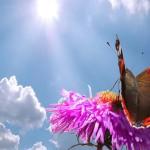 12-ФЦ-0001 бабочка небо солнце