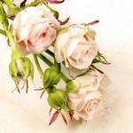 12-ФЦ-0012 кремовые розы