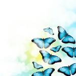 12-ФЦ-0016 голубые бабочки