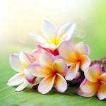 12-ФЦ-0031 тропические цветы